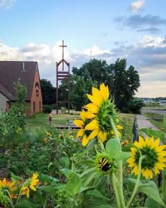Nativity + Sunflowers